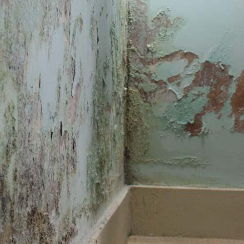 Gut bekannt Aufsteigende Feuchtigkeit im Mauerwerk - Dryzone PD71
